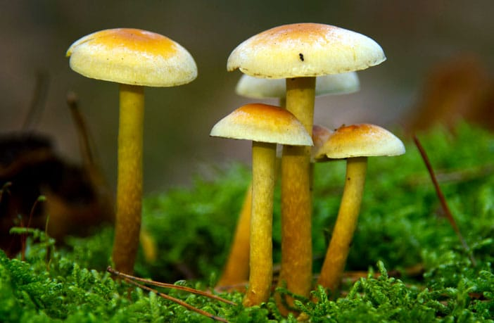 psychedelic mushrooms reduce authoritarianism and boost nature