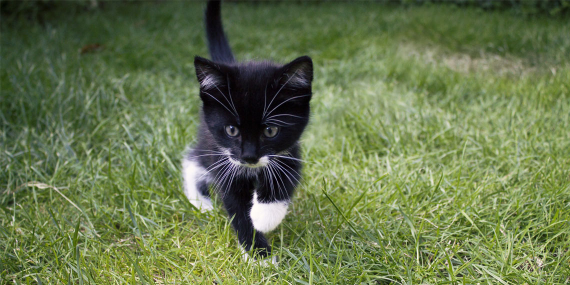 Pet cats support social skill development and anxiety mitigation among children with autism